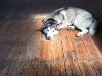 Floor Sanding Launceston