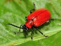 Beetle Control Adelaide